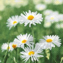 Napkins Full of daisies